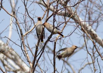 soku_26242.jpg :: 動物 鳥 野鳥 自然の鳥 未記入鳥