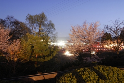 soku_26302.jpg :: 植物 花 桜 サクラ 夜桜