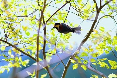 soku_26340.jpg :: 動物 鳥 野鳥 自然の鳥 未記入鳥