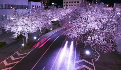 soku_26383.jpg :: 風景 街並み 夜桜