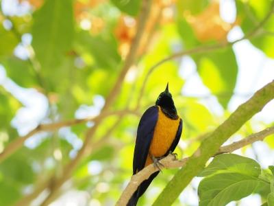 soku_26414.jpg :: 動物 鳥 野鳥 自然の鳥 未記入鳥