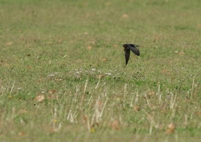 soku_26438.jpg :: 動物 鳥 野鳥 自然の鳥 未記入鳥