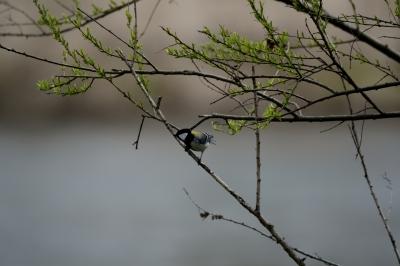 soku_26480.jpg :: 動物 鳥 野鳥 自然の鳥 未記入鳥