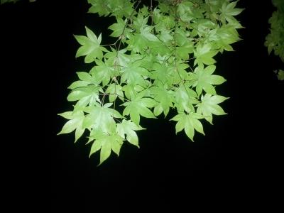 soku_26524.jpg :: 植物 草葉 夜景