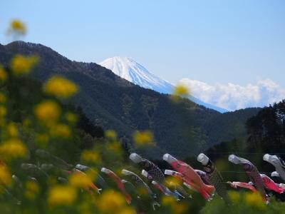 soku_26563.jpg :: 風景 自然 山 富士山 こいのぼり