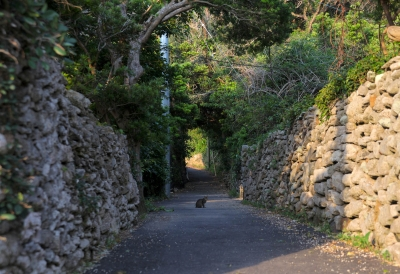 soku_26611.jpg :: 動物 哺乳類 猫 ネコ 壁 石壁 石垣