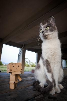 soku_26668.jpg :: 動物 哺乳類 猫 ネコ
