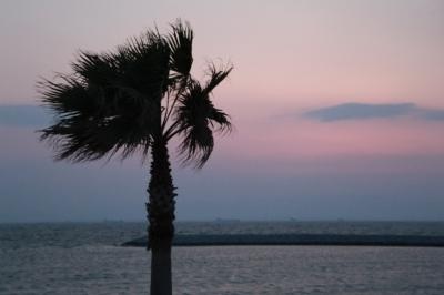 soku_26693.jpg :: 風景 自然 海 風 フェニックス