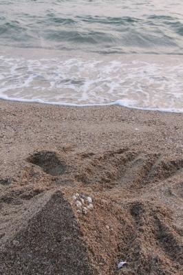soku_26694.jpg :: 風景 自然 海 ビーチ 砂浜