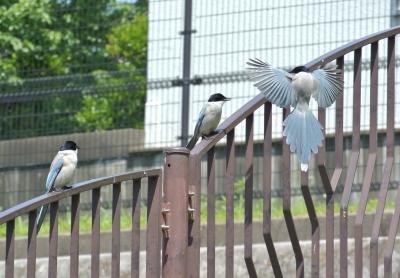 soku_26768.jpg :: 風景 街並み 公園 動物 鳥 野鳥 自然の鳥