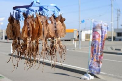 soku_26779.jpg :: 鶴岡 魚 スルメイカ 干物