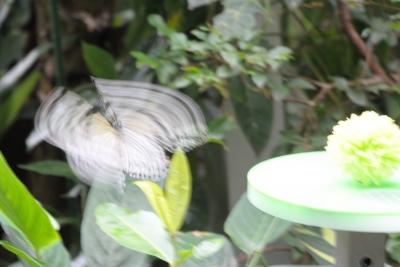 soku_26794.jpg :: 動物 虫 昆虫 蝶 チョウ スローシャッター