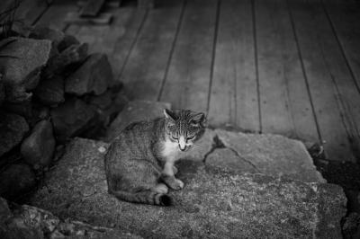 soku_26801.jpg :: 動物 哺乳類 猫 ネコ モノクロ