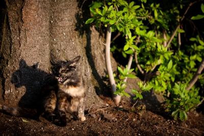 soku_26837.jpg :: 動物 哺乳類 猫 ネコ