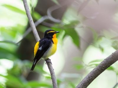 soku_26886.jpg :: 動物 鳥 野鳥 自然の鳥 未記入鳥