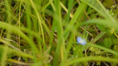 soku_26959.jpg :: 動物 爬虫類 両生類 カエル