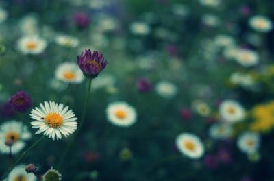 soku_26967.jpg :: 植物 花 白い花