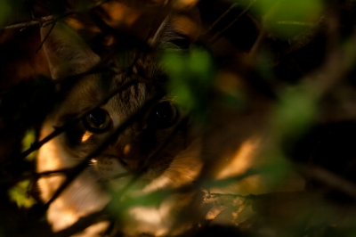 soku_26984.jpg :: 動物 哺乳類 猫 ネコ