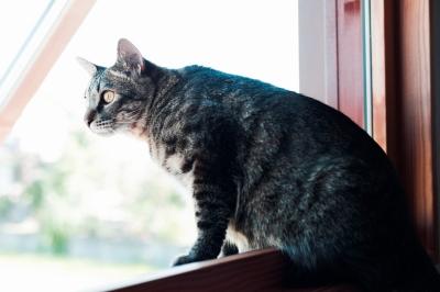 soku_27026.jpg :: 動物 哺乳類 猫 ネコ
