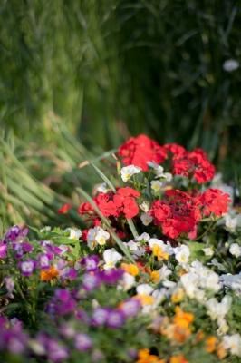 soku_27029.jpg :: 植物 花 赤い花