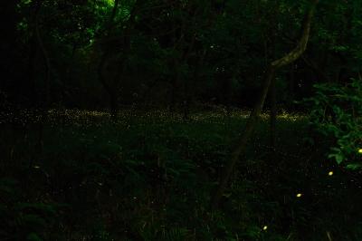 soku_27044.jpg :: 風景 自然 川 蛍 ホタル