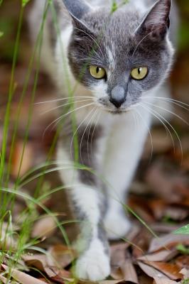 soku_27063.jpg :: 動物 哺乳類 猫 ネコ