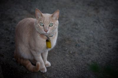 soku_27070.jpg :: 動物 哺乳類 猫 ネコ