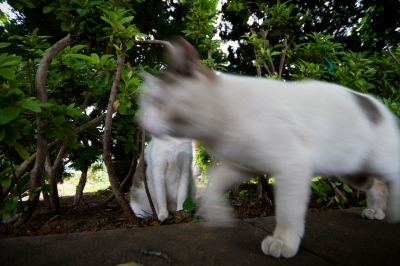 soku_27111.jpg :: 動物 哺乳類 猫 ネコ
