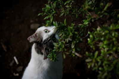soku_27153.jpg :: 猫