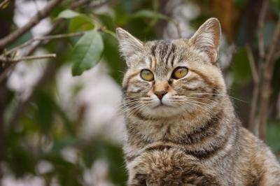 soku_27257.jpg :: 動物 哺乳類 猫 ネコ