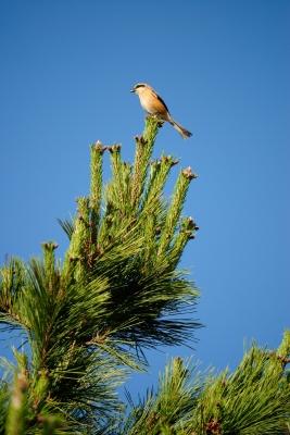 soku_27315.jpg :: 動物 鳥 野鳥 自然の鳥 未記入鳥