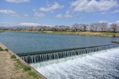 soku_27370.jpg :: 風景 自然 川 河川 河川敷 植物 花 桜 サクラ
