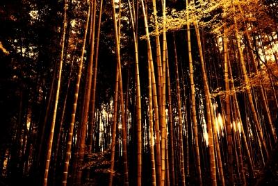 soku_27423.jpg :: 風景 自然 森林 竹林 中尊寺