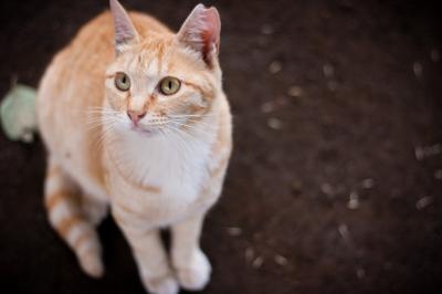 soku_27434.jpg :: 動物 哺乳類 猫 ネコ