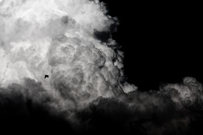 soku_27471.jpg :: 風景 自然 空 雲 積乱雲 鳥 モノクロ
