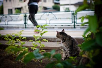 soku_27481.jpg :: 動物 哺乳類 猫 ネコ