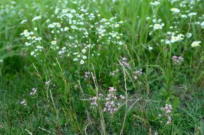 soku_27501.jpg :: 植物 花 白い花