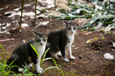soku_27595.jpg :: 動物 哺乳類 猫 ネコ
