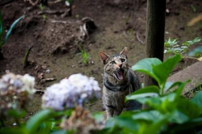 soku_27617.jpg :: 動物 哺乳類 猫 ネコ