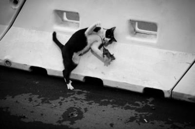 soku_27619.jpg :: 動物 哺乳類 猫 ネコ ネズミ捕食