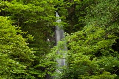 soku_27704.jpg :: 風景 自然 滝