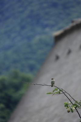 soku_27735.jpg :: 動物 鳥 野鳥 自然の鳥 未記入鳥