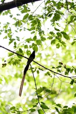 soku_27776.jpg :: 動物 鳥 野鳥 自然の鳥 未記入鳥