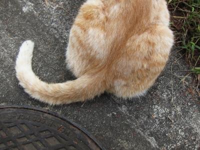soku_27866.jpg :: 猫のしっぽ