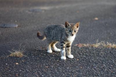 soku_27875.jpg :: 動物 哺乳類 猫 ネコ 子猫