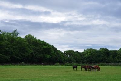 soku_27944.jpg :: 動物 馬 牧場 社台ファーム 北海道