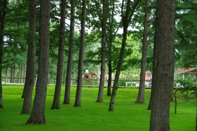 soku_27948.jpg :: 風景 自然 森林 乗馬