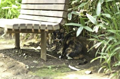 soku_28020.jpg :: 動物 哺乳類 猫 ネコ
