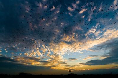 soku_28031.jpg :: 夕焼け 空 雲 風景 鳥