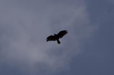 soku_28078.jpg :: 動物 鳥 猛禽類